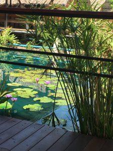 レストラン内の池の睡蓮の花