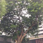 「この木なんの木」のような入り口に聳える木