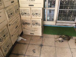 居候の猫たち