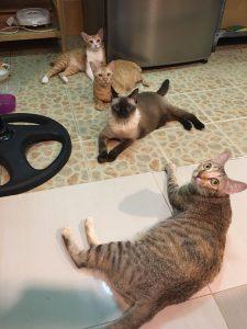 向こうからニンジャ、太郎、シントーン、ナナ
