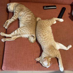 炭屋の猫は昼寝はするけど冬眠はしません。