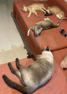 記事と写真は関係ありません。家の猫たち。