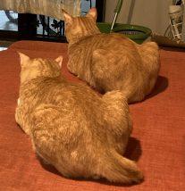 前向きな猫【本文とは関係ありません】